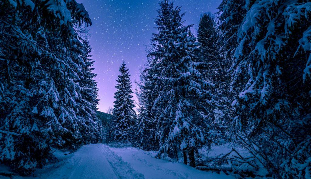 forêt enneigée à la nuit tombante